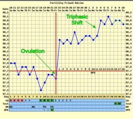 Grafico trifasico temperatura basale